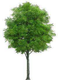 Les 5 éléments, le bois