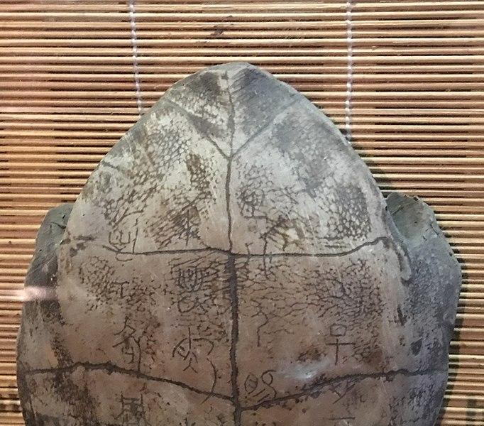 Carapace de tortue – divination
