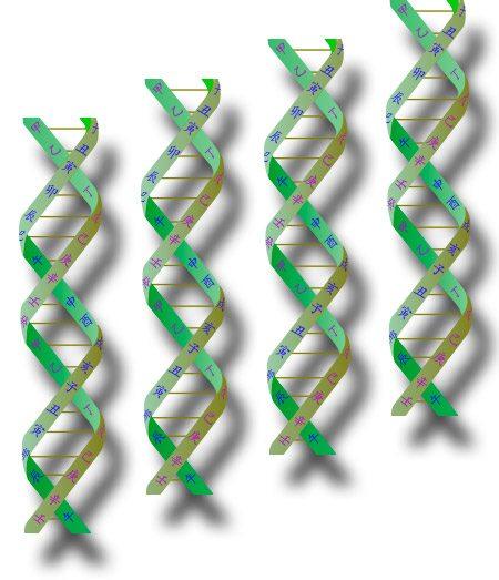L'ADN des quatre piliers de la destinée