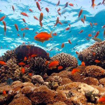L'aquarium en feng shui