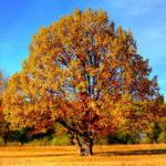 Les arbres en feng shui