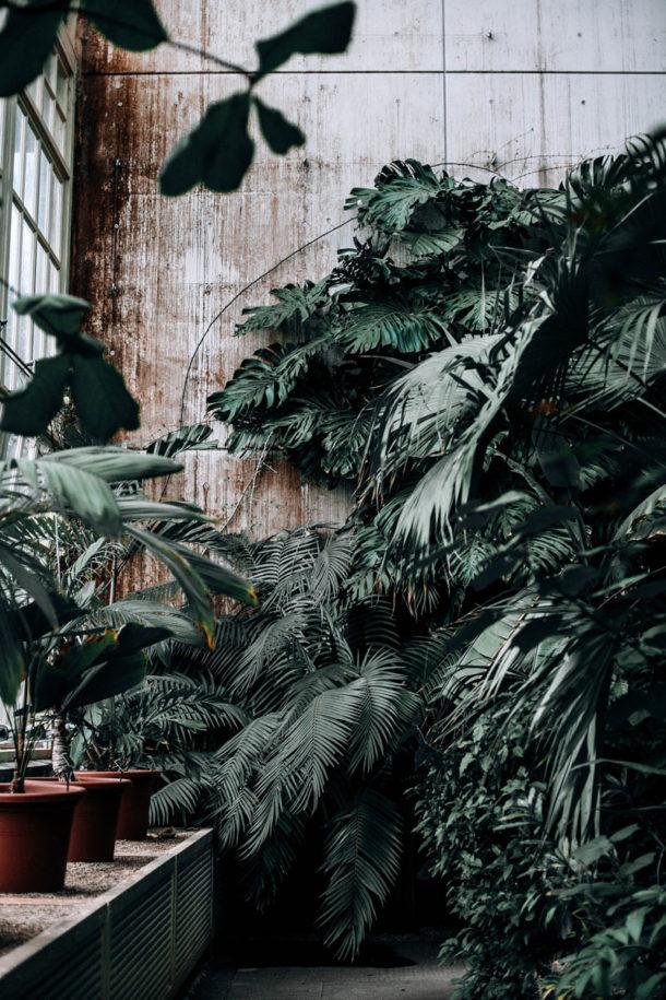les plantes en feng shui